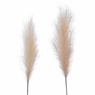 An Image of Set of 2 Neutral Pampas Grass