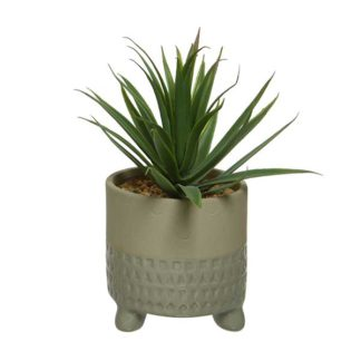 An Image of Small Beige Pot Plant