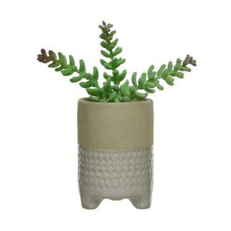 An Image of Medium White Pot Plant