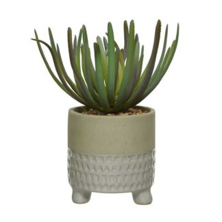 An Image of Small White Pot Plant